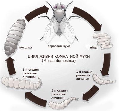 Как избавиться от мух в дачном туалете